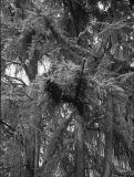 b/w photograph, 12 x 16 cm