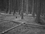 fotografie na barytovém papíře, cca 50x60 cm