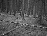 photograph on Baryta Paper, cca 50x60 cm