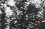 č/b fotografie, 65 x 100 cm