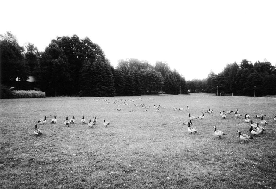 Ptáci, 2000